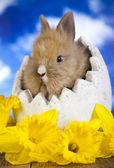 Cream bunny in egg shell — Stok fotoğraf