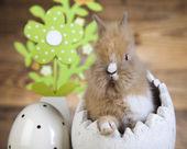 Easter bunny, egg — Stock Photo