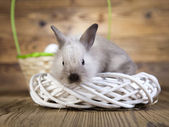 Easter bunny in nest — Stock Photo