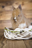Easter rabbit in nest — Stock Photo