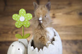 Easter egg, cream bunny, flower — Stock Photo