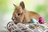 Easter bunny, eggs  in nest — Stock Photo