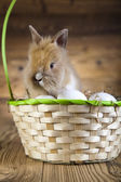 Funny bunny in basket — Stock Photo