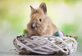 Easter nest, rabbit,eggs — Stock Photo