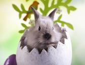 Easter bunny and egg — Stock Photo