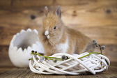 Rabbit in nest — Stock Photo