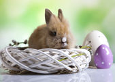 A rabbit and Easter eggs — Stock Photo