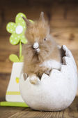 Serious rabbit with green flower — Stockfoto