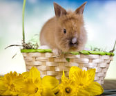 Rabbit in basket with flowers — Stockfoto