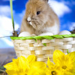 Fluffy bunny in basket — Stock fotografie