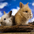 Different rabbits in nest — Stock Photo