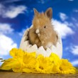 Easter bunny and daffodils — Stock Photo #42551089