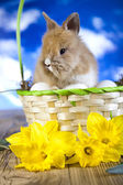 Fluffy bunny in basket — Stock Photo