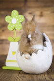 Rabbit with green flower — Stock Photo