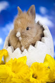 Cream bunny in egg shell — Stockfoto