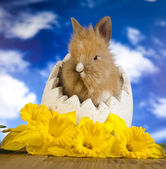 Easter bunny and daffodils — Stock Photo