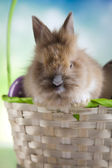 Surprised bunny in basket — 图库照片