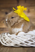 Adorable bunny — Stock Photo