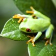 Colorful exotic frog — Stock Photo #49416395