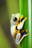 Frog on bamboo stem — Stockfoto