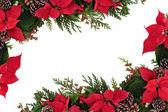 Poinsettia Floral Border — Stock Photo