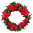 Christmas Poinsettia Wreath — Stock Photo