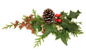 Winter Flora Decoration — Stock Photo