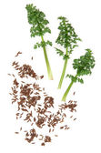 Caraway Seed and Leaf Sprigs — Stock Photo