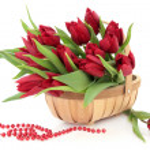 Red Tulip Flowers — Stock Photo