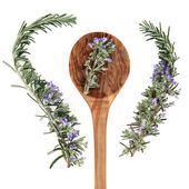 Rosemary Herb — Stock Photo