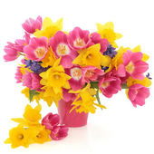 Spring Flower Beauty — Stock Photo