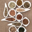 Stock Photo: Medicinal and Magical Herbs