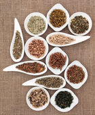 Medicinal and Magical Herbs — Stock Photo