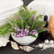 Herb Spa Treatment — Foto Stock