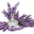 Lavender Flower Scent — Photo