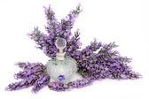Lavendel bloem geur — Stockfoto