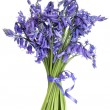 Stock Photo: Bluebell Flower Posy