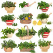 Stock Photo: Herb Sampler
