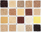 Grain Sampler — Stock Photo