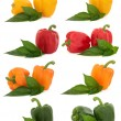 Stock Photo: Pepper Selection