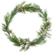Cedar Leaf Wreath — Stock Photo