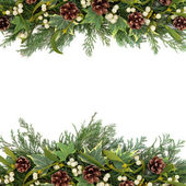 Christmas Greenery Border — Stock Photo