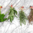 Herbs Hanging and Drying — Stock Photo