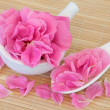 Rose Petal Flowers — Stock Photo