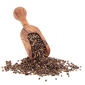 Coriander Seed — Stock Photo