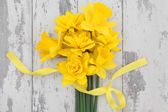 Spring Daffodil Beauty — Stock Photo