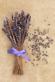 Lavender Posy — Stock Photo