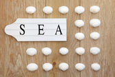 Shell and Sea Sign — Stock Photo