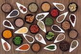 Vzorkovník bylin a koření — Stock fotografie