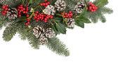 Winter Flora — Stock Photo